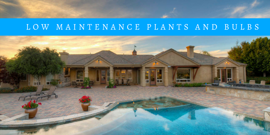 Low Maintenance Plants And Bulbs For The San Diego Patio